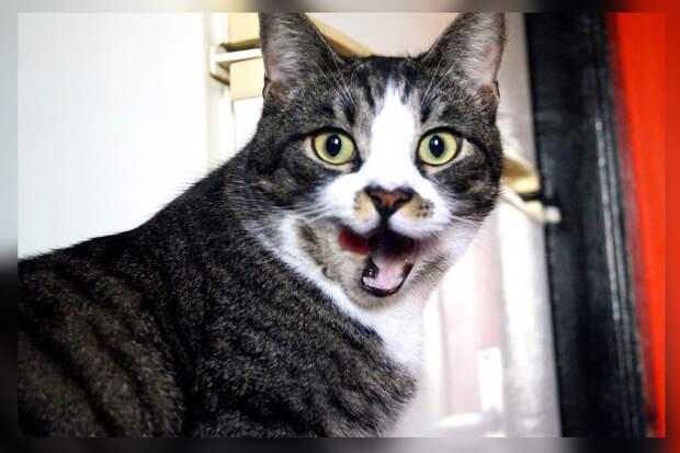 Подобрал котёнка на улице и оставил у себя. Столько странностей в одном коте я никогда не видел