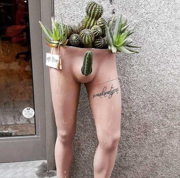 Магазин кактусов, например
