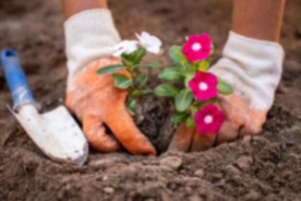 На Дубравной высадили цветы