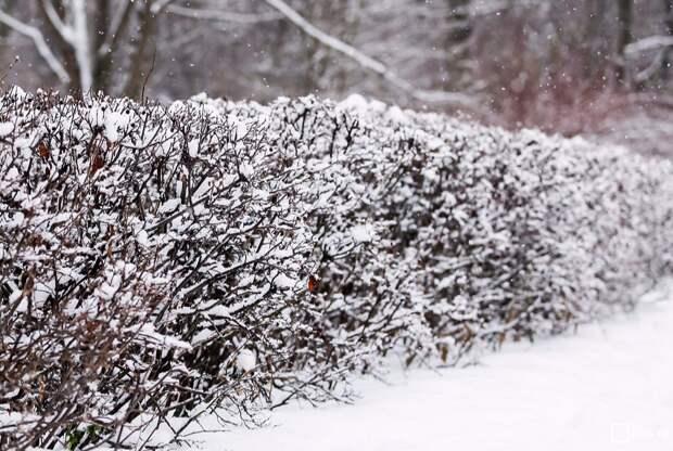 Зима в городе/mos.ru