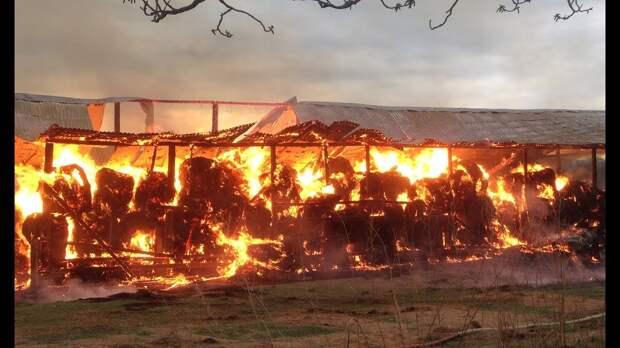 Поджигатель колхозного сена в Тверской области отправился за решетку