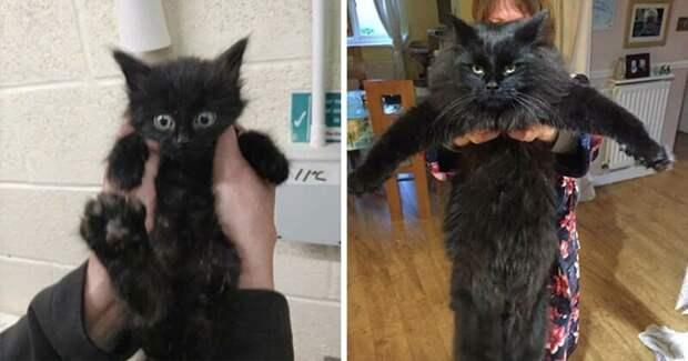25 фотографий кошек до и после того, как их подобрали сулицы