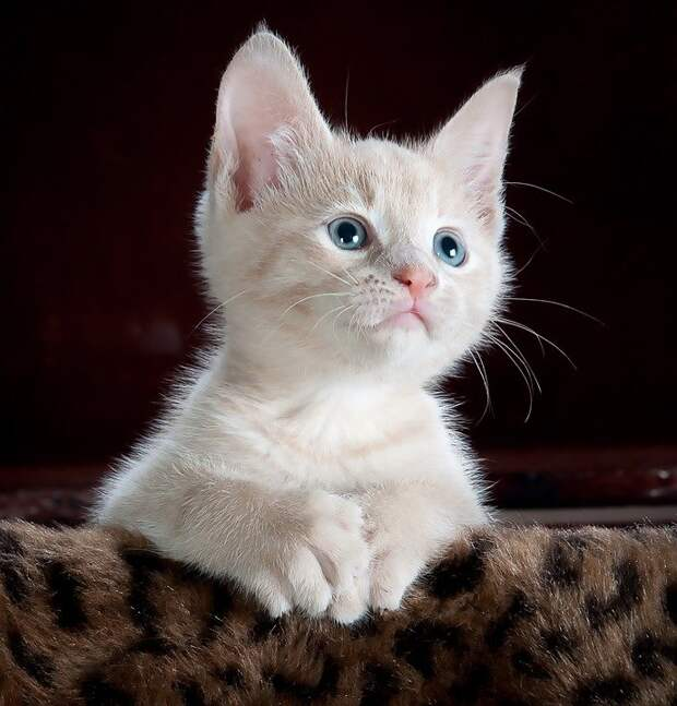 Кошки с Башиловской ждут новых хозяев
