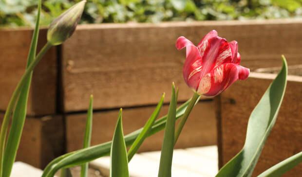 Более 16 тысяч цветов высадят вЛенинском районе к9мая