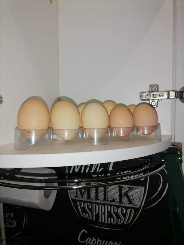 Хранить яйца в холодильнике - пережиток прошлого. Расскажу, как надо и почему