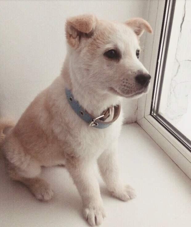 щенок на окне