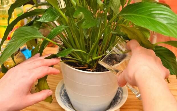 Банановая кожура спасет ваши растения!