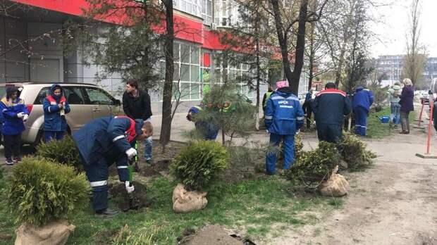 Ростову нехватило взвешенного подхода козеленению