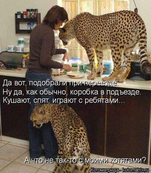 1451737594_kotomatricy-28