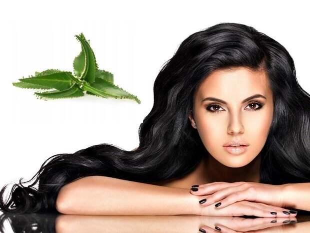 лечебные свойства каланхоэ для волос