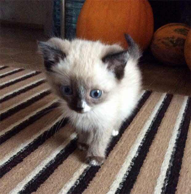 Подобрали маленького котёнка, весила меньше 400 грамм