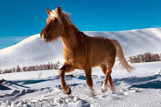 Возвращение из мертвых: фермер возрождает редкую породу лошадей
