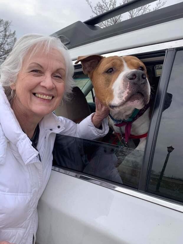 Женщина пригласила в гости друга, а в результате осталась без собаки. Питомца возвращала целая группа волонтеров