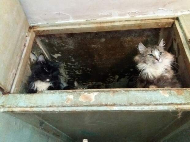 Для кошек, спасенных из грязной квартиры в Санкт-Петербурге, ищут новый дом