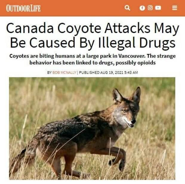 Койоты-наркоманы как побочный продукт эльфийской кармы