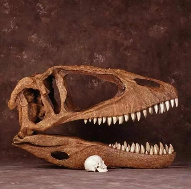 Самый опасный для человека динозавр Динозавры, Хищник, Тираннозавр, Спинозавр, Аллозавр, Гиганотозавр, Тероподы, Палеонтология, Пресмыкающиеся, Ископаемые, Раптор, Мезозой, Юрский период, Меловой период, Длиннопост