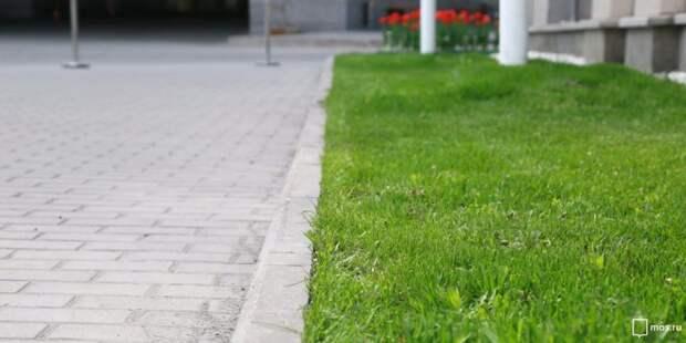 Во дворе на Окской восстановили газон — Жилищник