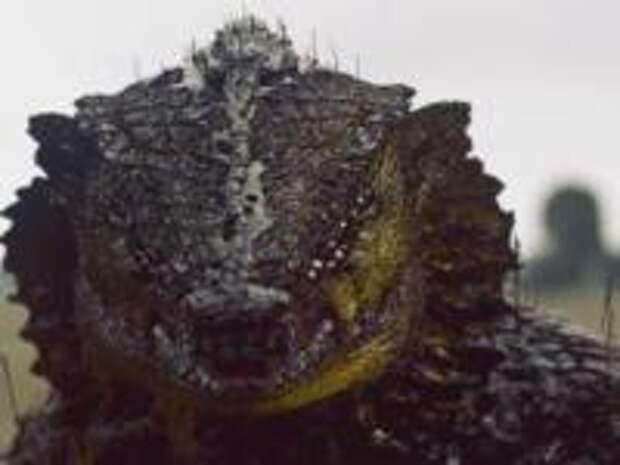 По следам рептилоидов… или тайны страны нагов