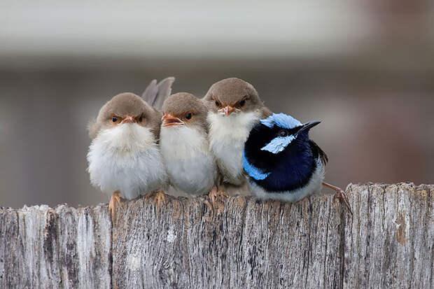 cute-bird-parents-26__700