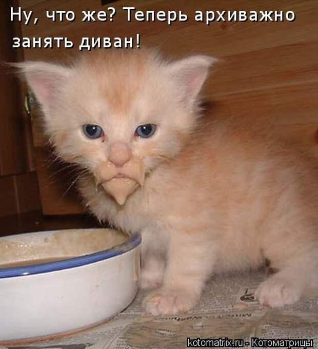 1451737573_kotomatricy-4
