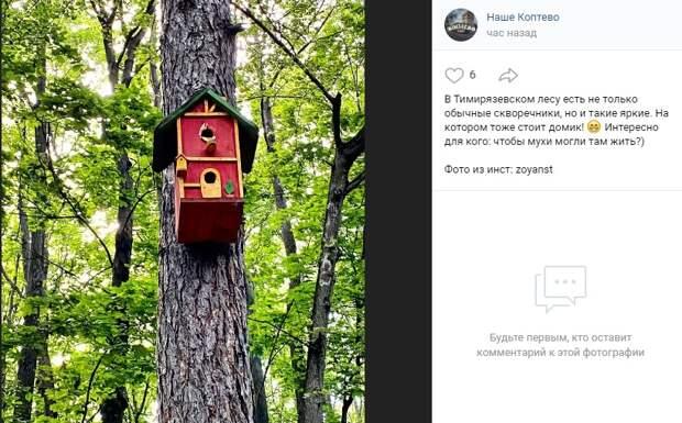 Фото дня: яркий птичий дом в Тимирязевском лесу