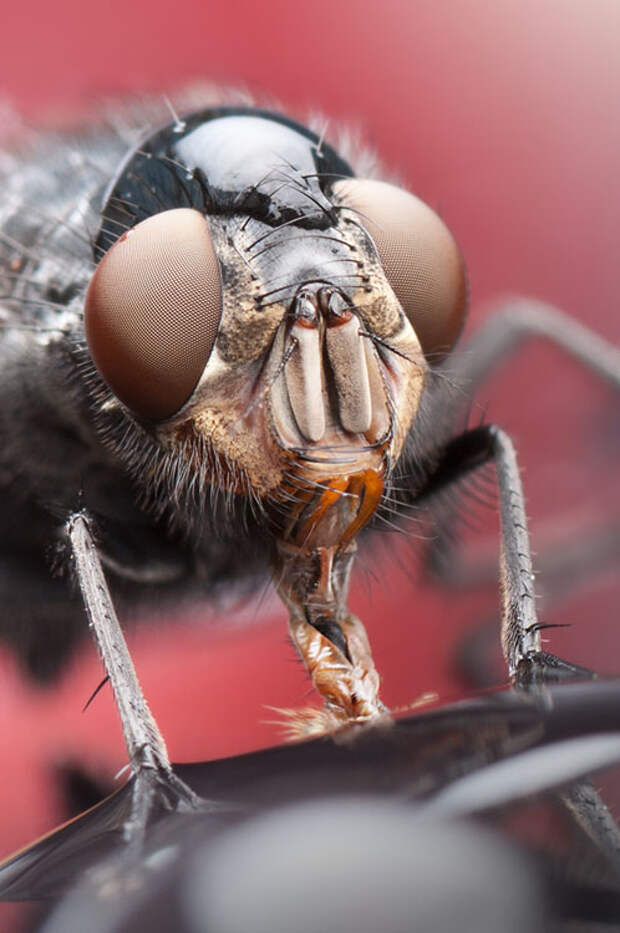 Incredible Macro Photos of Insects with Drops of Water On Their Heads waterdropinsects 5