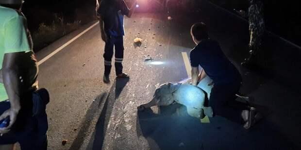 ВТаиланде мотоциклист сбил слоненка, носпасатель реанимировал малыша