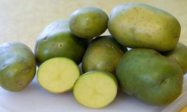 Картинки по запросу зеленый картофель