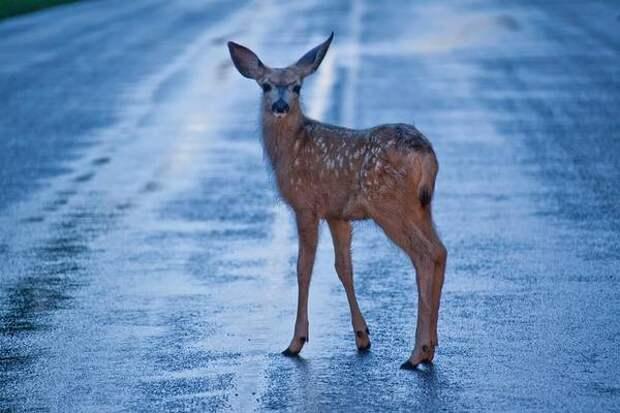 Кузбассовцев предупредили о сезонной миграции диких животных