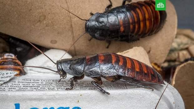 Житель Екатеринбурга пришел в супермаркет со своими тараканами