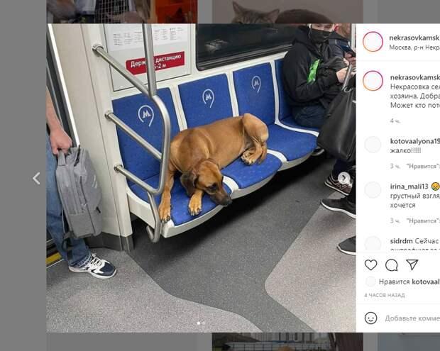 «Хатико» отправился в путешествие по метро со станции «Некрасовка»