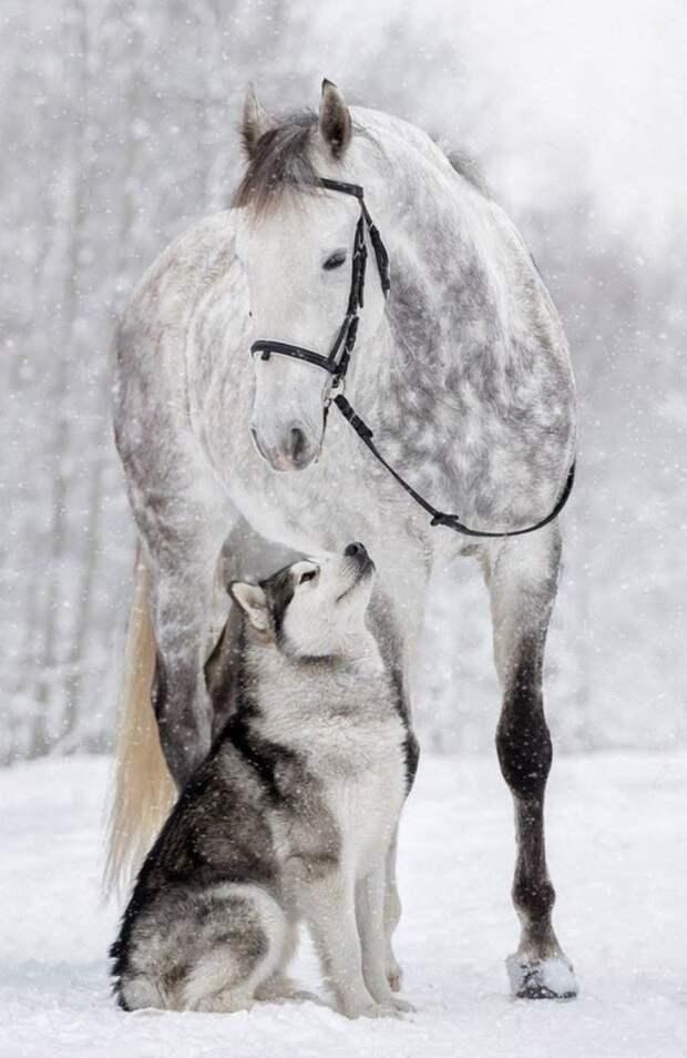 20 ярких фотопримеров того, что в природе возможна любая дружба дружба, дружба животных, кошка, крыса, лошадь, попугай, собака