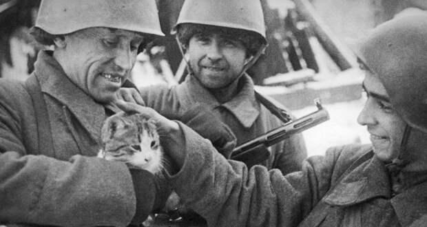 Мыши – враги советских летчиков под Сталинградом