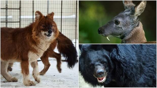 10 удивительных животных, которые обитают в России животные, красная книга, редкие животные, россия
