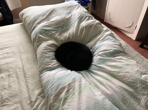 А кто сказал, что черные коты к неприятностям?