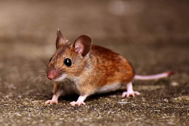 Игра с мышью