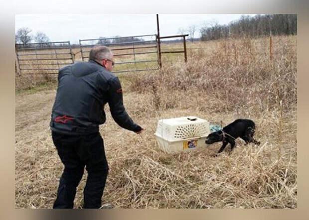 Отец с сыном, катаясь далеко от города, решили проверить брошенную старую переноску для животных