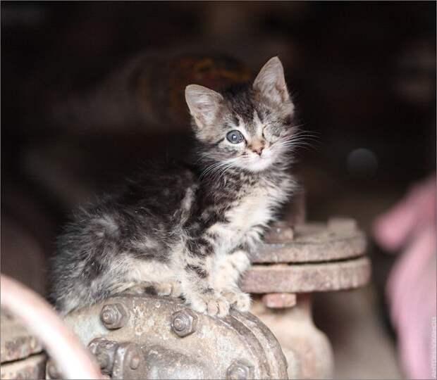 В одном дворе, уже который год Жил одноглазый и безухий кот...