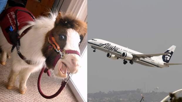 Министерство транспорта США разрешило перевозить на борту самолета мини-лошадок