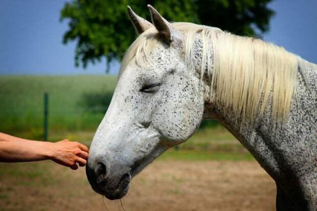 Лошадь. Животные. Фото: pixabay.com