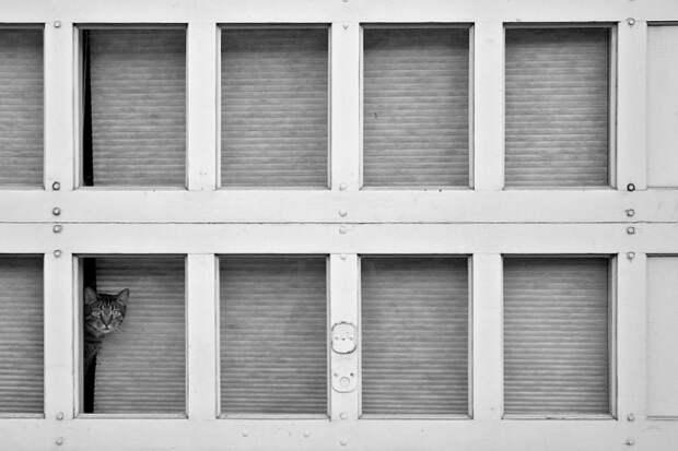 7239960-R3L8T8D-650-cat-waiting-window-53