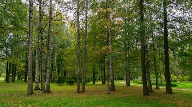 Удельный парк в Санкт-Петербурге