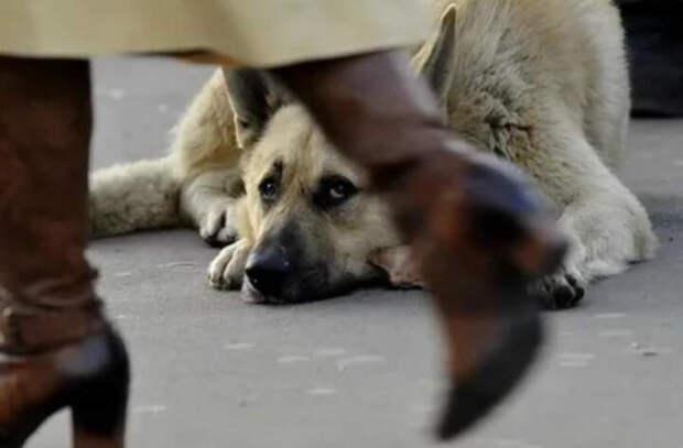 Почему нет брошенных животных в Нидерландах