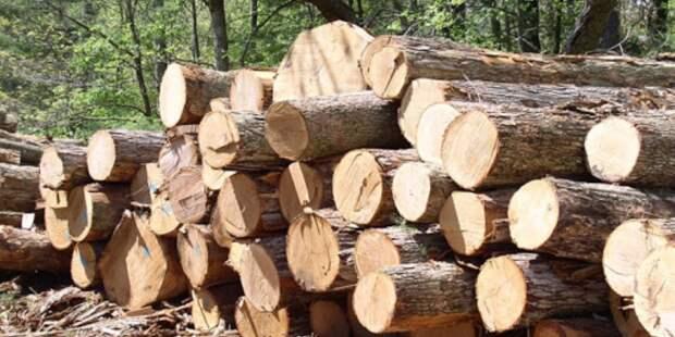 Глеб Франк переключился с крабов на древесину