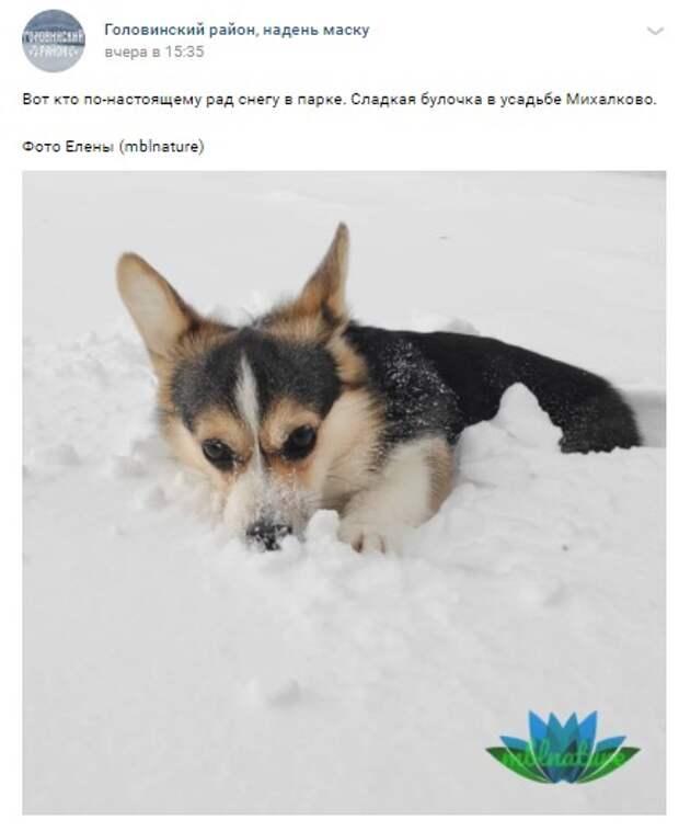 Фото дня: песик «утонул» в снегу усадьбы Михалково