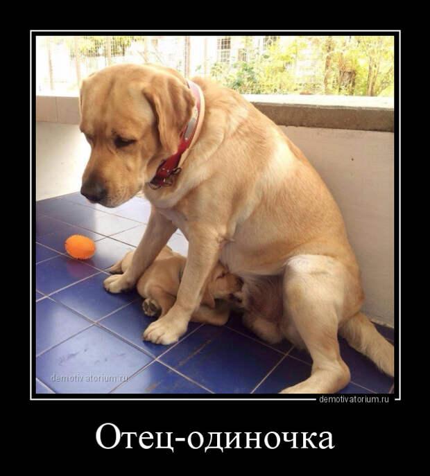 5402287_demotivatorium_ru_otecodinochka_113254 (600x665, 138Kb)