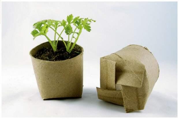 Не знаете куда деть втулку от тулатеной бумаги? Посадите в нее рассаду и высаживать можно не вынимая из такого стаканчика - пусть он гниет и дает дополнительные силы для роста растений дача, идеи, интересное, посевная, советы, хитрости