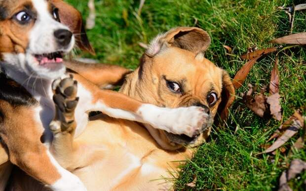15 забавных фото домашних животных, из-за которых невозможно перестать смеяться