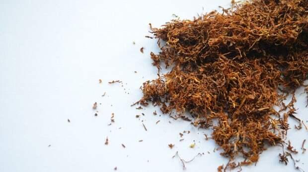 Производителей сигарет в РФ могут обязать делать упаковки обезличенными