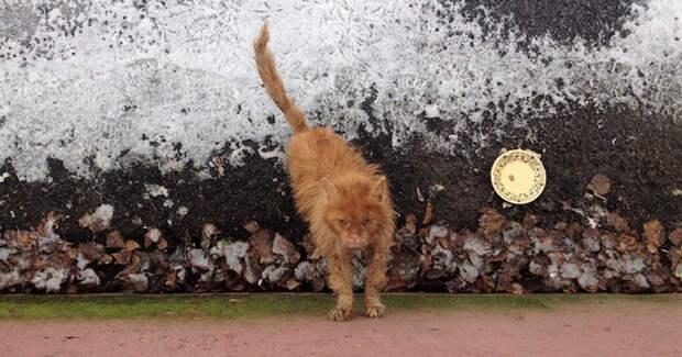 """""""Кот в аквариуме!"""" Однажды парень выглянул в окно и чуть не упал… Там стоял ободранный кот, который недавно был красавцем!"""